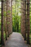 Träd längs de Kaaterskill nedgångarna skuggar i de Catskill bergen, New York royaltyfria bilder