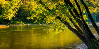 Träd längs den Shenandoah floden, i harpers färja, västra Virgini royaltyfria bilder