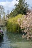 Träd längs floden Windrush i Witney Royaltyfri Fotografi