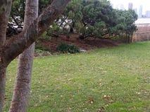 Träd längs Hudson River Park Flod i bakgrund, Jersey City bortom arkivbild