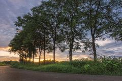 Träd längs vägen på soluppgång arkivbild