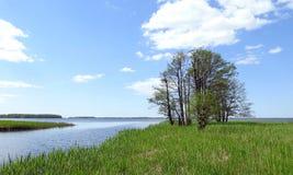 Träd, liten chanel och Kroku lankasjö, Litauen royaltyfria foton