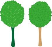 Träd livstid larch Arkivbilder