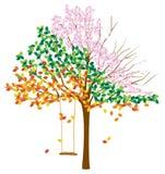 Träd med åtskilliga säsonger Arkivbild