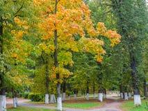 Träd med att gulna lövverk längs banan i hösten parkerar Arkivbilder