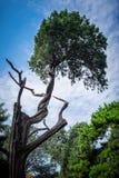 Träd med att intressera skeva kala filialer mot en blå himmel med vita moln arkivfoton