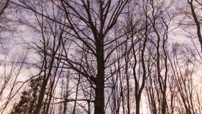 Träd med att snurra för stjärnor arkivfilmer