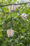 Träd med böcker Arkivbilder