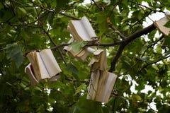 Träd med böcker Fotografering för Bildbyråer