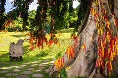Träd med band i econationalparken Yang Bay i Hna Trang, Vietnam royaltyfria foton