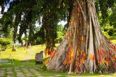 Träd med band i econationalparken Yang Bay i Hna Trang, Vietnam arkivfoton
