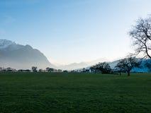 Träd med berg i bakgrunden Arkivfoto
