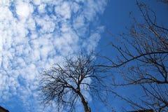Träd med blå himmel i min organiska trädgård royaltyfri bild