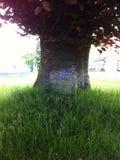 Träd med blomman Royaltyfri Bild