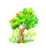 Träd med busken som dras av färgblyertspennor stock illustrationer