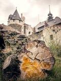 Träd med castel i bakgrund arkivfoto