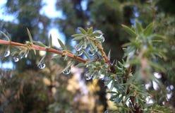 Träd med daggdroppar Arkivfoto