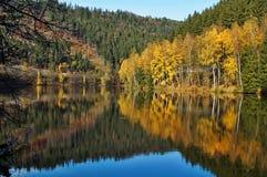 Träd med den guld- spegeln för höstsidor ovanför yttersidan av dammet Royaltyfria Foton