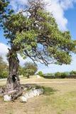 Träd med den ihåliga stammen Arkivfoto
