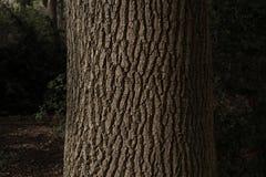 Träd med det trevliga skället Royaltyfri Foto