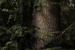 Träd med det trevliga skället Royaltyfri Fotografi