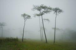 Träd med dimma Arkivfoton