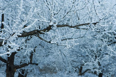 Träd med djupfrysta filialer Arkivfoton
