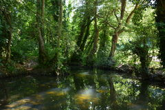 Träd med en flod Fotografering för Bildbyråer