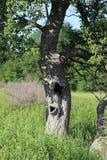 Träd med en mun Fotografering för Bildbyråer