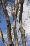 Träd med en papegoja Arkivfoto