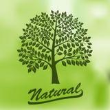 Träd med en rund krona - ekologi som är naturlig Royaltyfria Foton