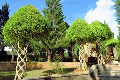 Träd med filialer som flätas samman som spiral i trädgård royaltyfri fotografi