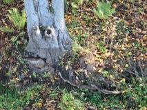 Träd med framsidan Royaltyfria Foton