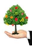 Träd med frukter på gömma i handflatan som isoleras på vitbac Fotografering för Bildbyråer