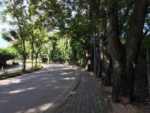 Träd med gatan på trädgården arkivfoton