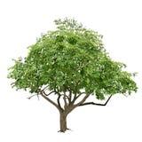 Träd med gräsplansidor i sommaren Arkivfoton