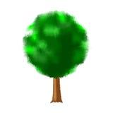 Träd med grön lövverk Arkivbilder
