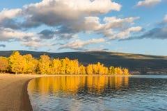 Träd med gula höstsidor glöder i ljus av inställningssolen along lakeshore med berg i bakgrund royaltyfri fotografi