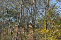 Träd med gula sidor i sen höst arkivbilder