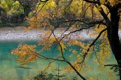 Träd med gula sidor nära bergsjön Royaltyfria Bilder