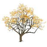 Träd med gulingsidor i nedgången Arkivfoto