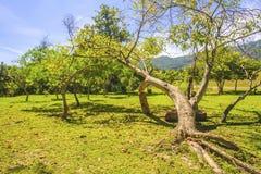 Träd med gulingsidor på soliga dagar Arkivfoto