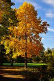 Träd med härliga Cclorful höstsidor Arkivfoto