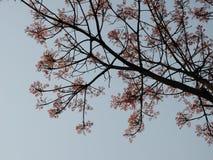 Träd med härliga tjänstledigheter Arkivbilder