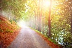 Träd med höst färgar tidigt på morgonen mist Royaltyfri Bild