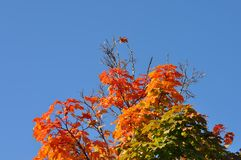 Träd med höstliga sidor Arkivbild