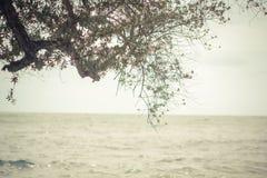 Träd med havsbakgrund Arkivfoto