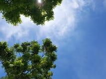 Träd med himlen i en solig dag Royaltyfri Fotografi