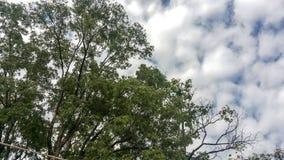 Träd med himmel Arkivbilder