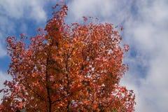 Träd med himmel i höst Arkivbild